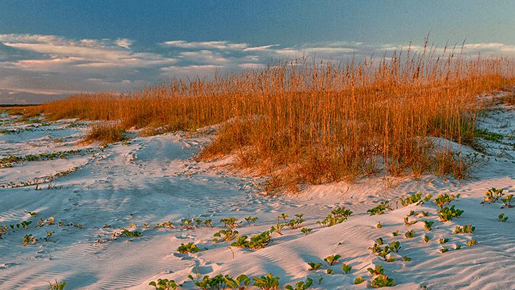 Cumberland-oats-sand-dune.png